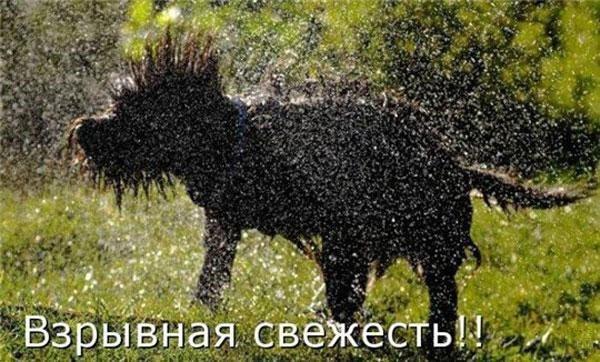 Прикольные картинки с животными