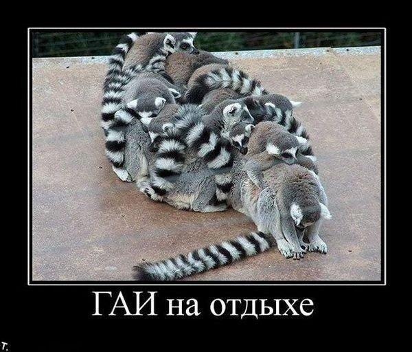http://xaxa-net.ru/uploads/posts/2012-12/1354954667_demotivator4.jpg