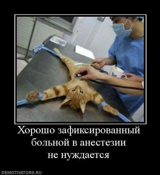 Ржачные демотиваторы про животных