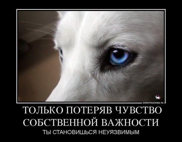 Демотиваторы про Мишу козла и не только....