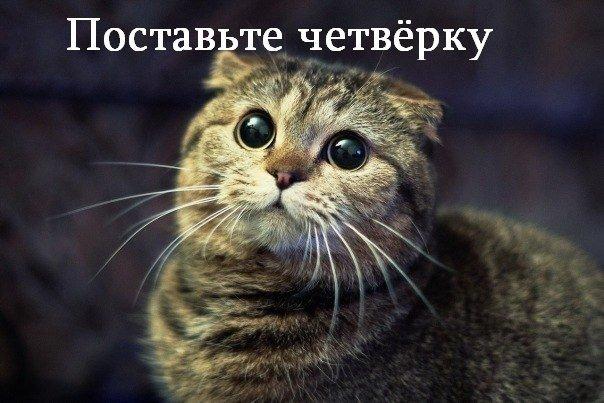 Установить Яндекс бар? -  прикольные комиксы и мемки