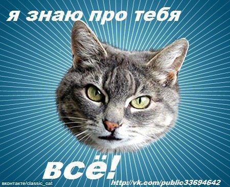 Типичный кот - прикольные мемки про животных