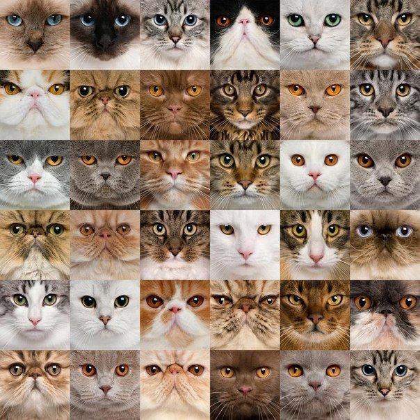 Прикольные животные - красивые фото