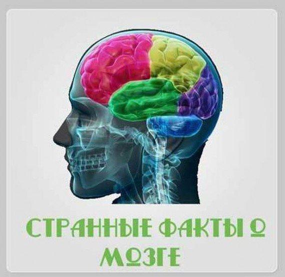 Прикольные факты о мозге