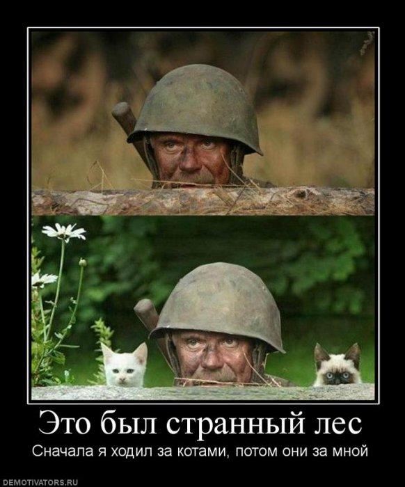 Демотиваторы про котЭ