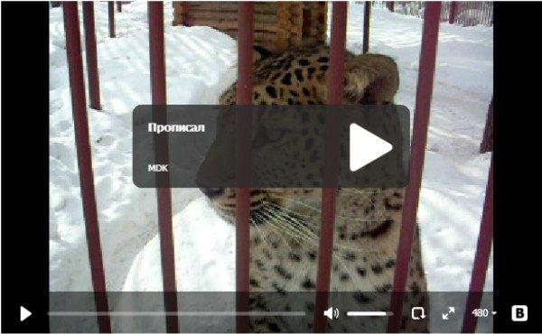 Прописал - прикольное видео про животных