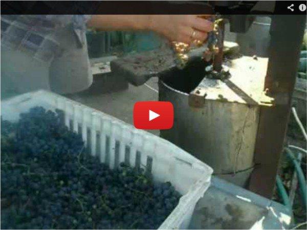 Рецепт приготовления вина - смотрим домашнее видео