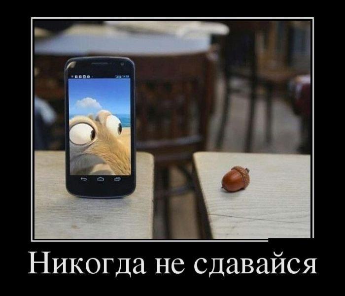 Приколькартинки на мобильный смотреть онлайн бесплатно