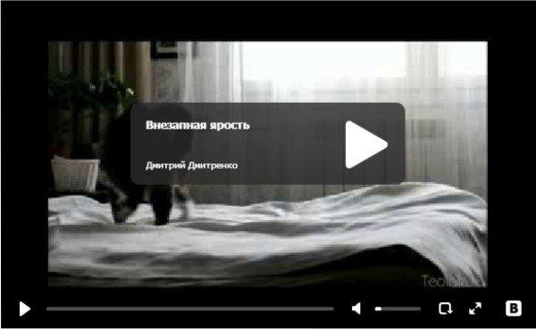 Внезапная ярость - видео про кошку