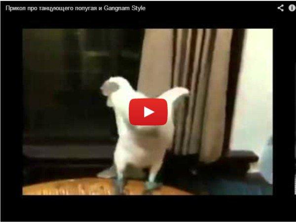 Танцующий попугай - Gangnam Style