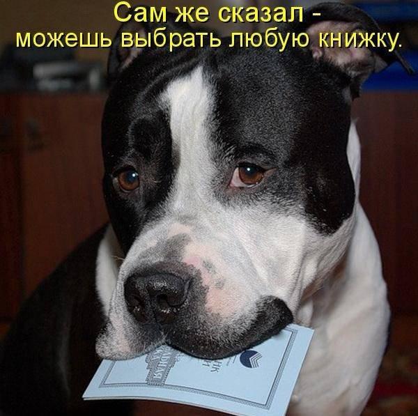 собаки прикольные фото