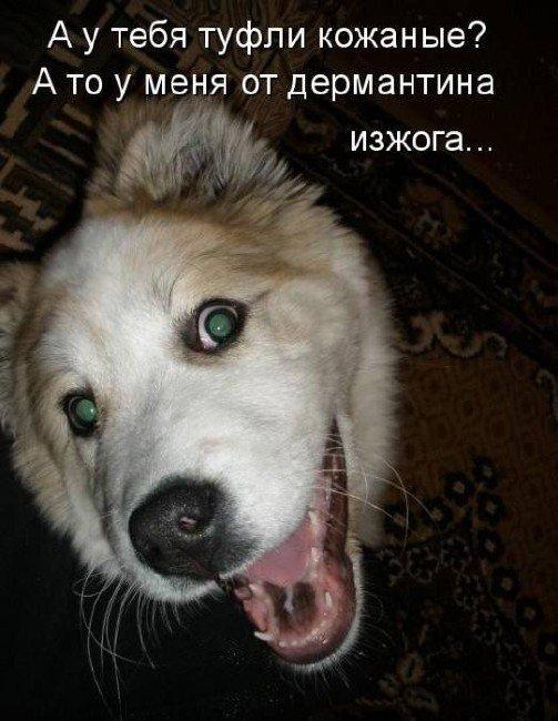 бой собак приколы