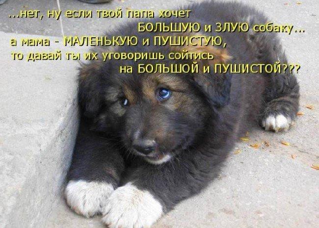 Прикольные картинки про собак
