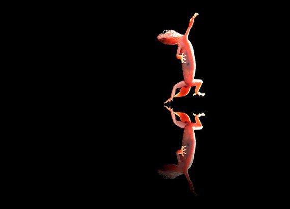 Танцы с животными