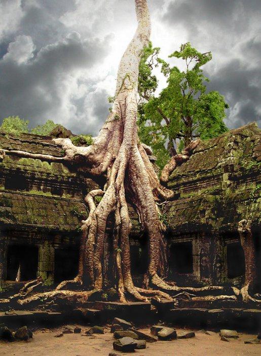 Самые удивительные деревья