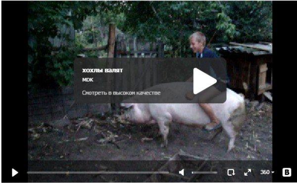 Хохлы валят - катание на свинье
