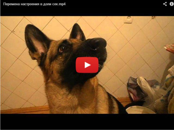 Перемена настроения - видео про собаку