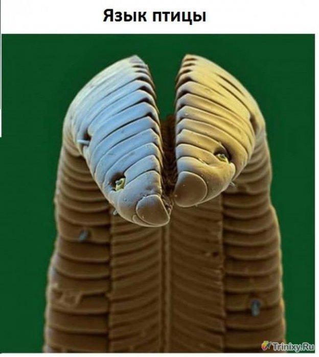 Как выглядят некоторые вещи под микроскопом
