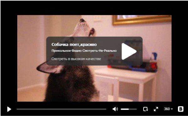 Хаски поёт - видео про собаку
