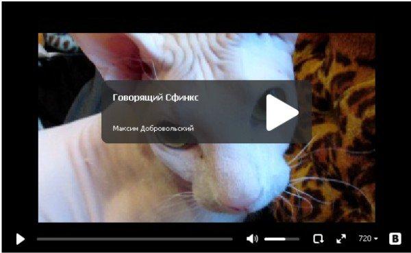 Говорящий сфинкс - прикол про кота