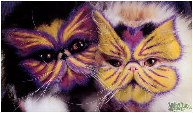 Прокачанные коты