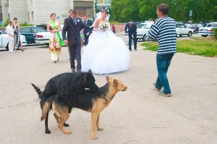 ... фото со свадеб. Прикольные фото: xaxa-net.ru/prikol_pics/1041-neudachnye-tatu.html