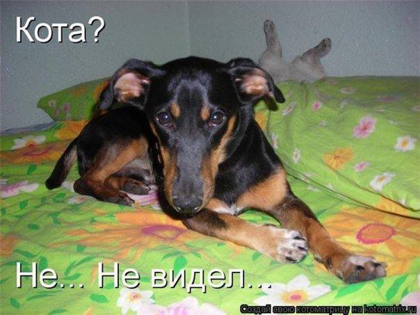 Прикольные фотографии собак