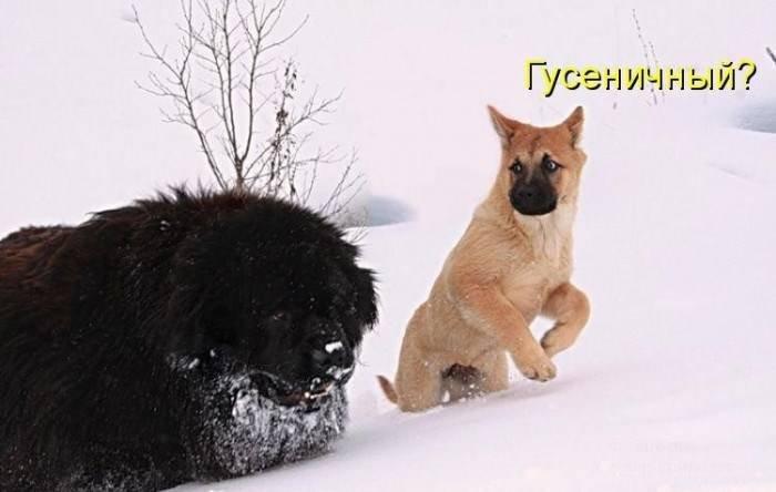 Картинки веселые с надписями про собак