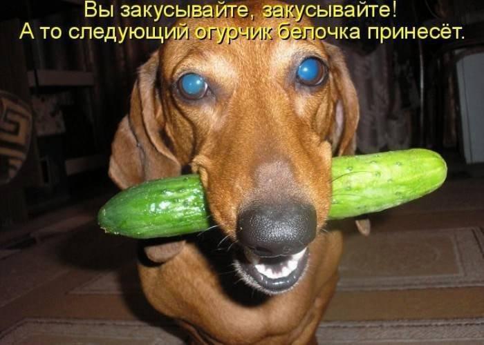 Картинки по запросу смешные картинки про собак с надписями
