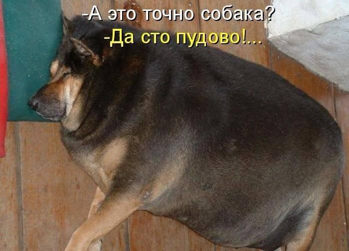 Картинки с надписями про собак