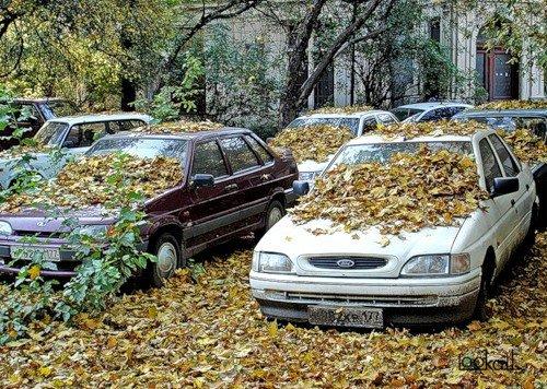Самые красивые фотографии осени