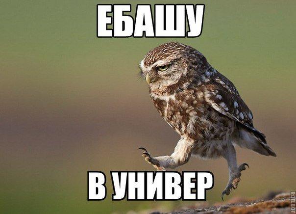 Прикольные мемы - приколы дня