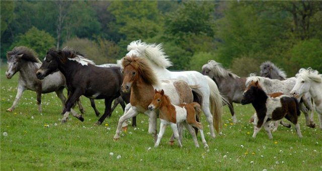 Красивые фотографии лошадей