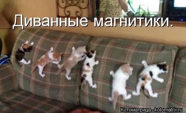 Приколы про животных из Котоматрицы