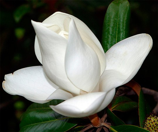 Красивые цветы - красивые фото