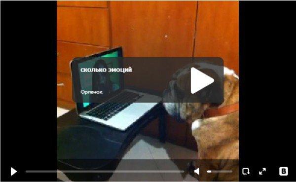 Буря эмоций - реакция собаки