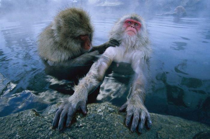Прикольные фотографии обезьян