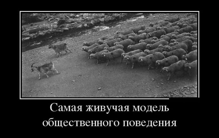 бокал демотиваторы про овец пройдут годы, она