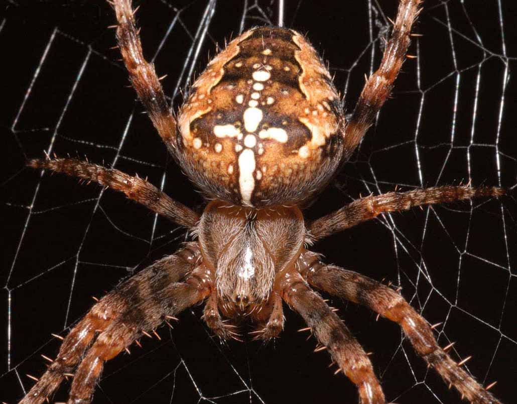 пауков и их названия