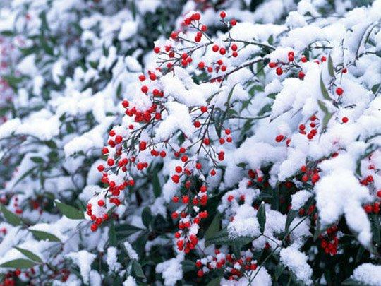 Открытка у нас зима