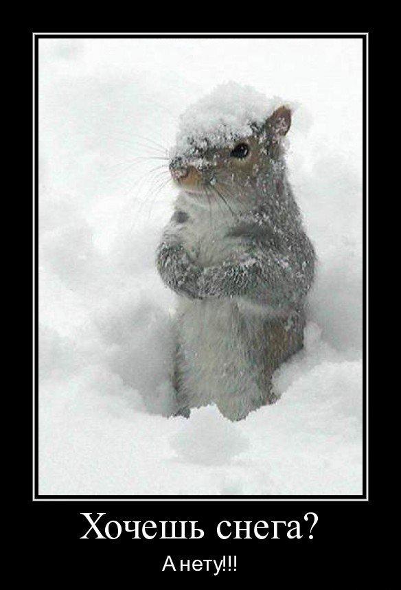 демотиваторы про начало зимы разновидность