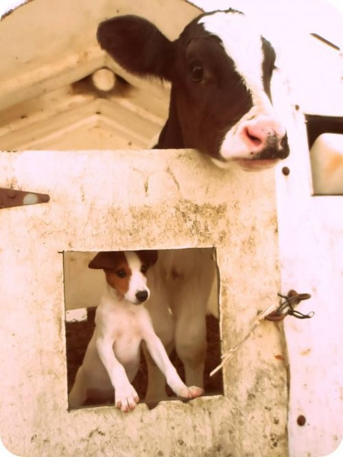 Позитивные фотографии животных