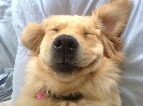 Красивые животные - смешные фото