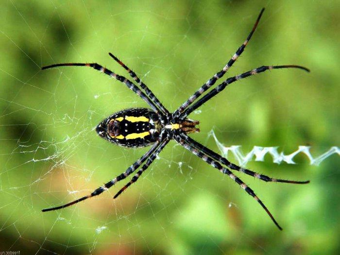 Красивые фотографии пауков