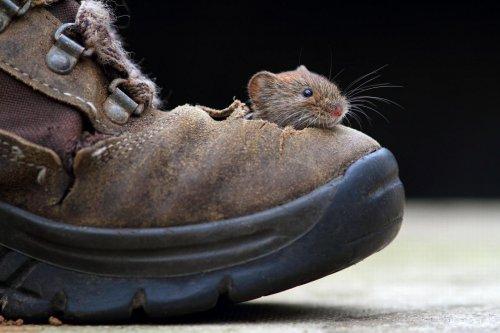 Очаровательные зверьки - фото животных