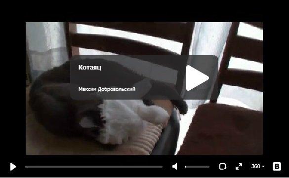 Котаяц - прикольный кот