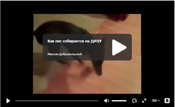 Пёс собирается на дачу - прикольное видео