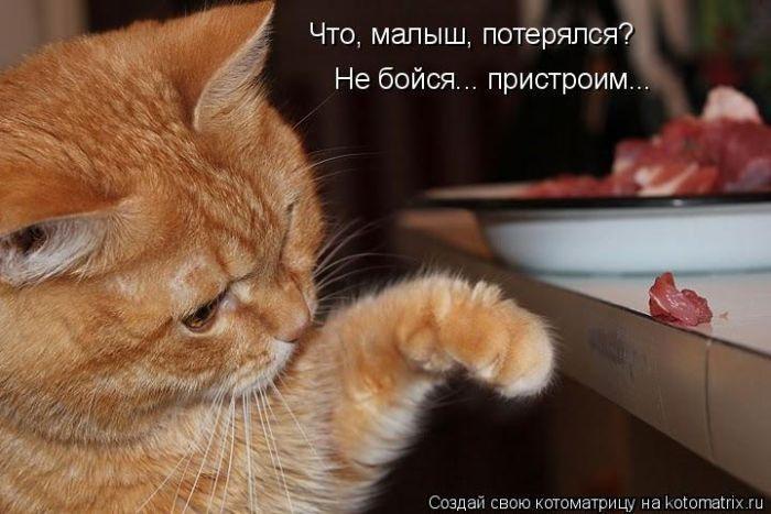 Прикольные котоматрицы - смешные картинки