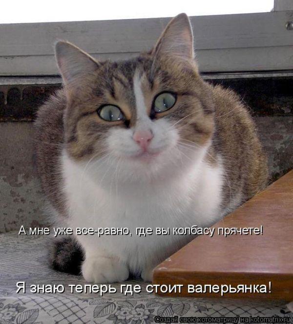 Лучшие котоматрицы - про животных