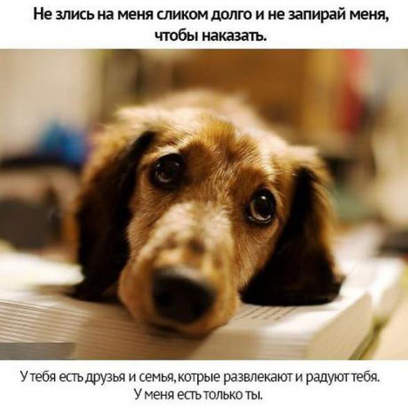 То что нужно вашей собаке